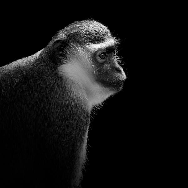 portraits-of-animals-7