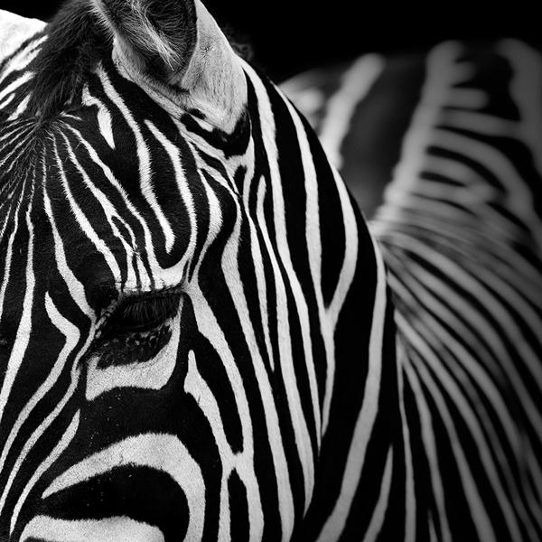 portraits-of-animals-8