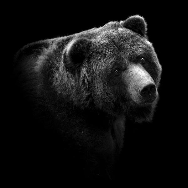 portraits-of-animals-9