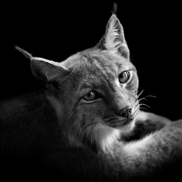 portraits-of-animals