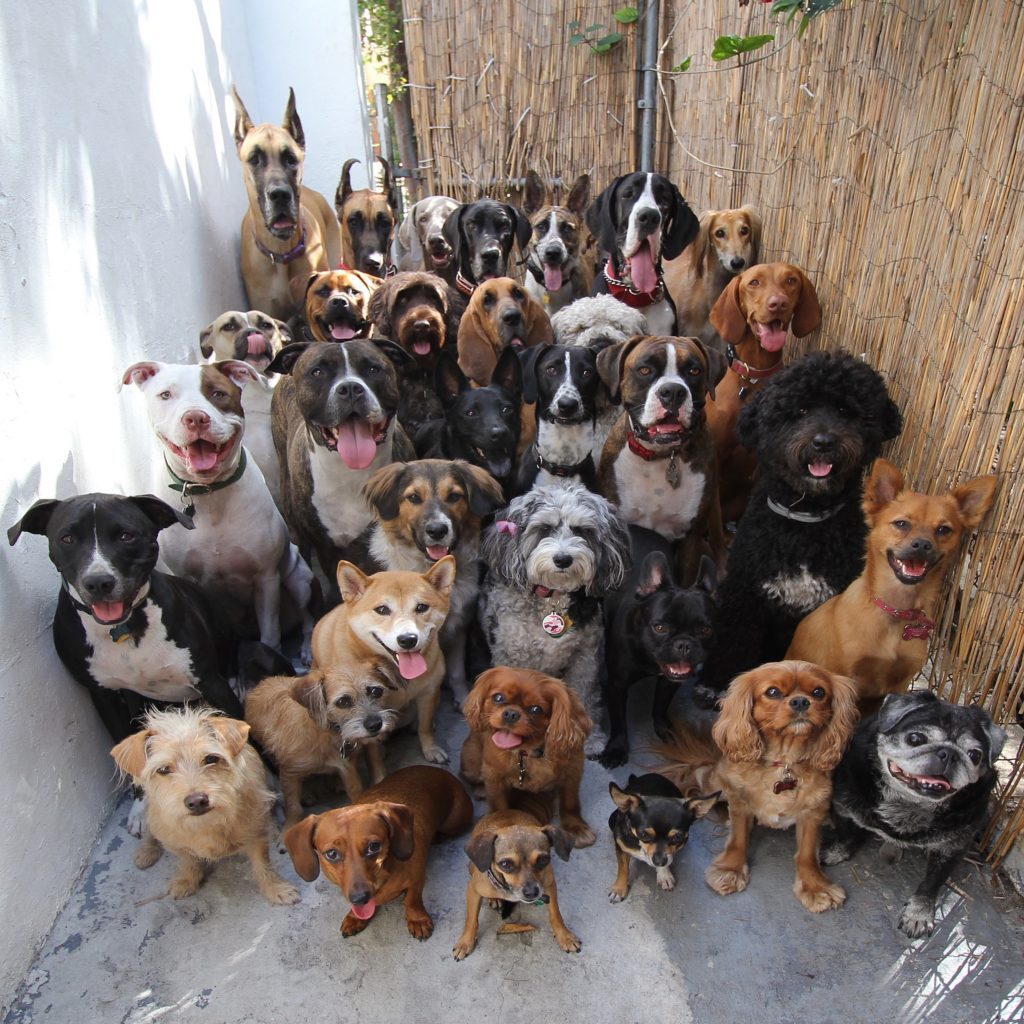 30-dogs