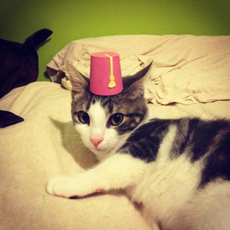 animals-in-hats-14
