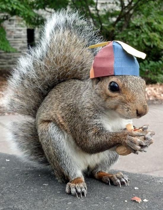 animals-in-hats-15