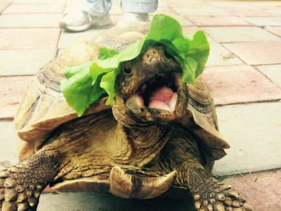 animals-in-hats-16