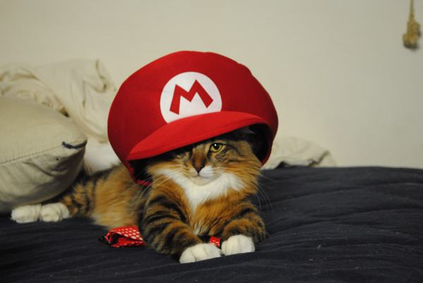 animals-in-hats-2