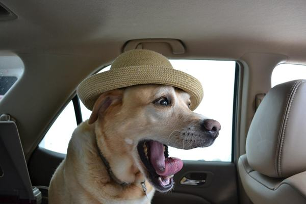 animals-in-hats-7