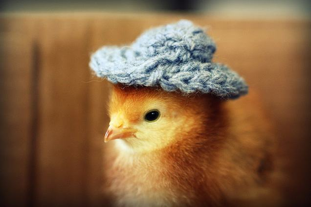 animals-in-hats-8