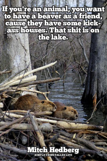 Beaver-Joke-1