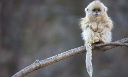 20 Animals You Can Save From Extinction