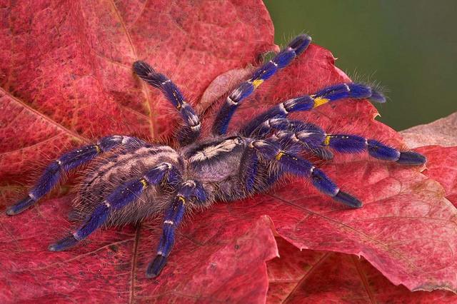 Spider Gooty