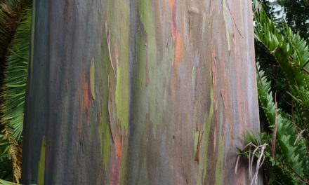 Ever Seen a Tree Made of Rainbows? Here's one.