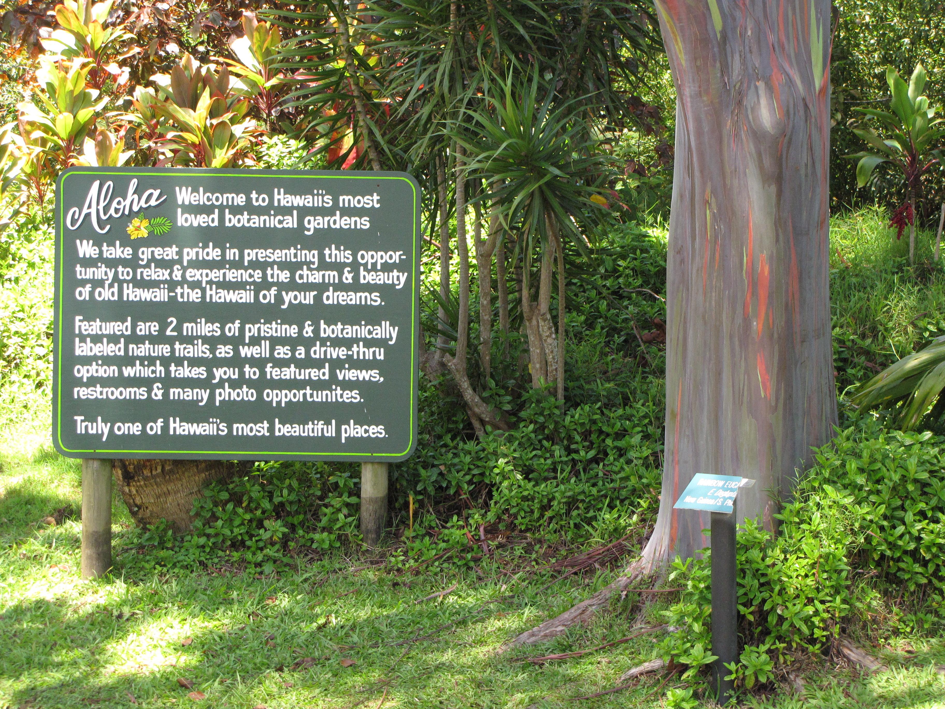Information Via Fairchild Tropical Botanic Garden In Miami Florida Rainbow Eucalyptus 01
