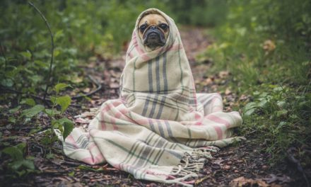 The Eulogy of a Dog